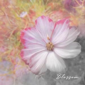 album cover image - Blossom